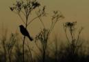 Jewel Tones in July: Life in a Vital Marsh